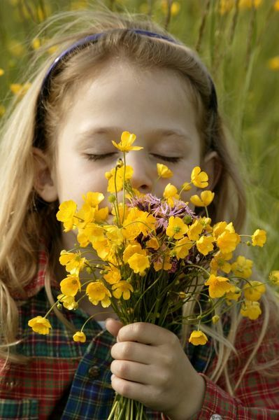 Young girl smelling a bunch of freshly-picked Buttercups (Ranunculus sp.)