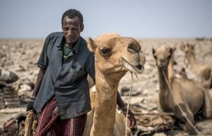 Afar salt miner with his camel at Lake Assal
