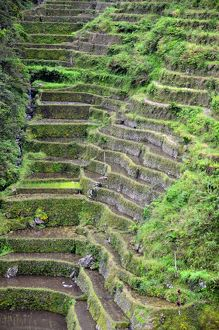 Ancient rice terraces