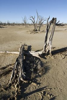Land degradation: Lake Taarbin