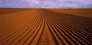 Ploughed wheat paddock,