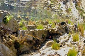 Underwater view of a rock pool.