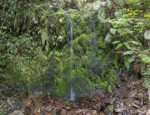 Waterfall in rainforest with ferns and mosses