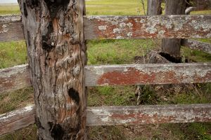 A weathered timber fence.