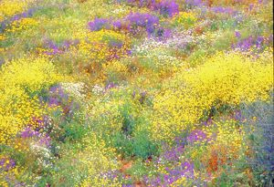 Wildflowers in spring.